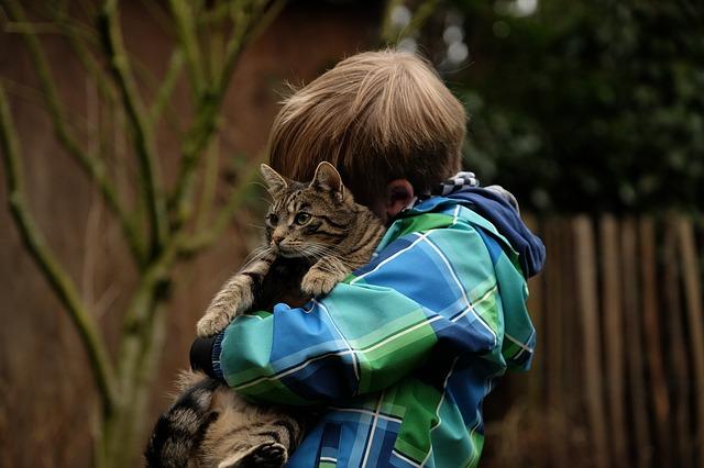 kočka chlapce